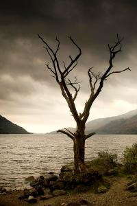 dying-tree-on-shoreline-loch-lomand-john-short